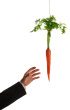 dangling-the-carrot-xxl