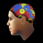 brain2-freedigitalphotos